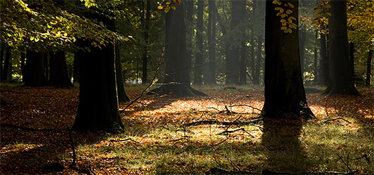 Welcome Wood guided meditation - For slowing right down