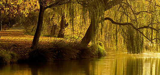 Willow Tree guided meditation - For grounding and balance